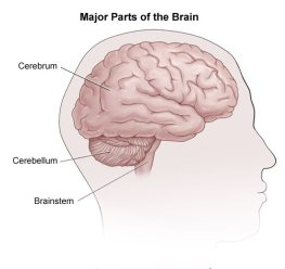 Three parts of the brain